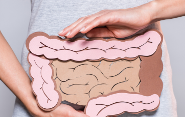 The colon plays an important role in digestion.